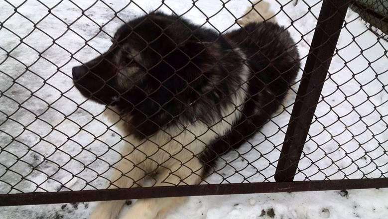 Вольер для собаки из сетки рабицы в Екатеринбурге